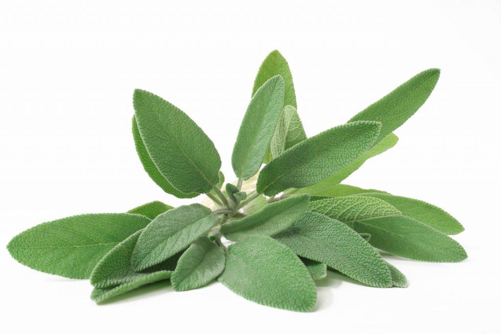 Als Heilpflanze hat sich Salbei bei Kehlkopfentzündungen vielfach bewährt. Insbesondere das Gurgeln mit Salbeitee ist hier als Hausmittel empfehlenswert. (Bild: ChaotiC_PhotographY/fotolia.com)