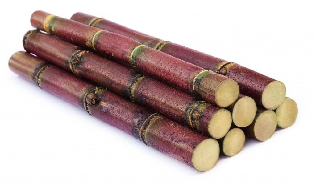 Langes Kauen ist das wesentlichste Merkmal von Flechtern. Bild: Swapan/fotolia)