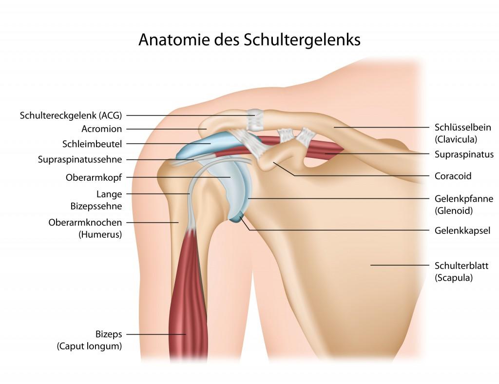 Schulterblattschmerzen: Schmerzen am Schulterblatt