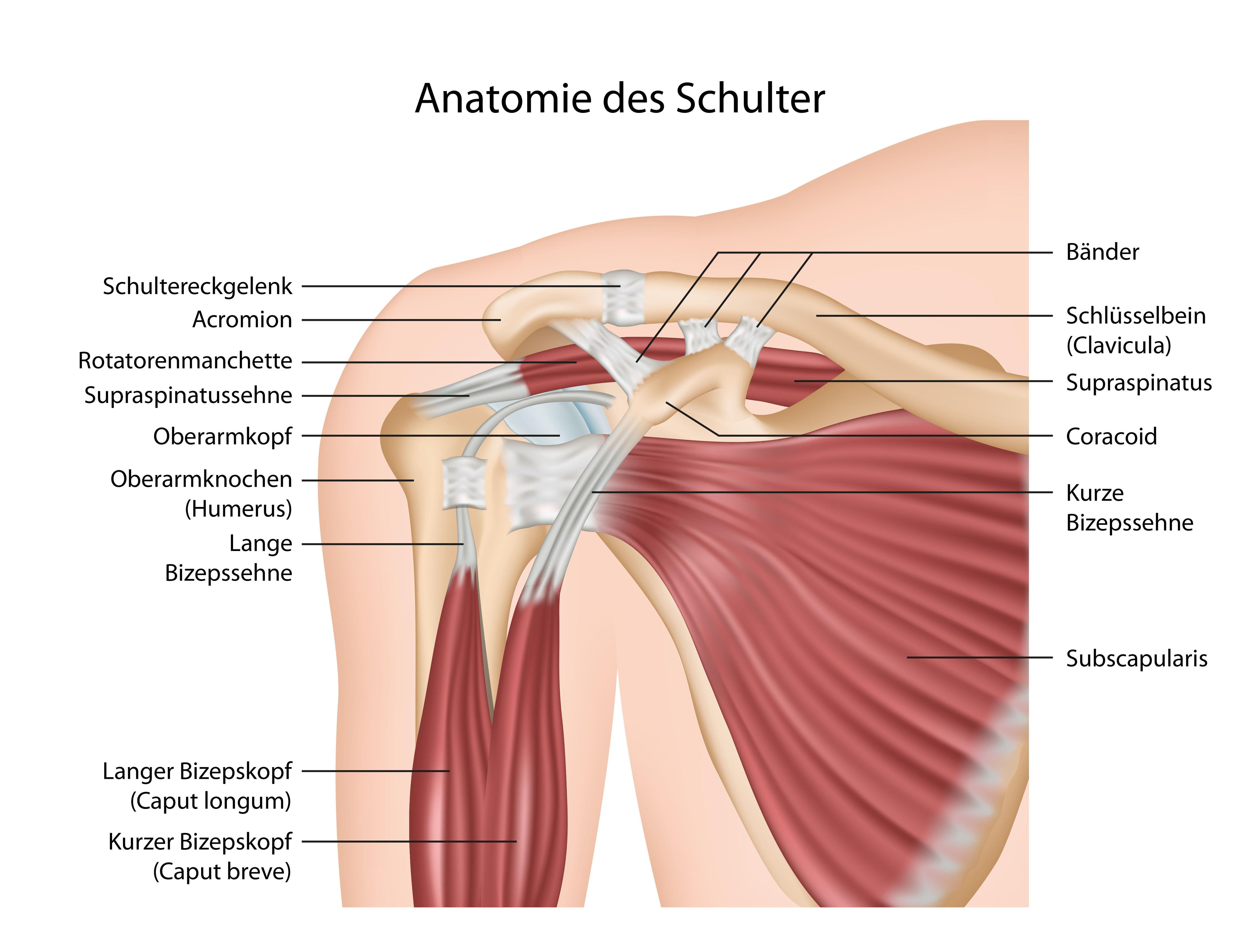 Gelenkschmerzen in der Schulter stoppen