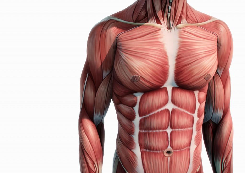 Oft handelt es sich bei Stechenden Schmerzen um muskuläre Verspannungen. Vor allem wenn diese Bewegungsabhängig sind.