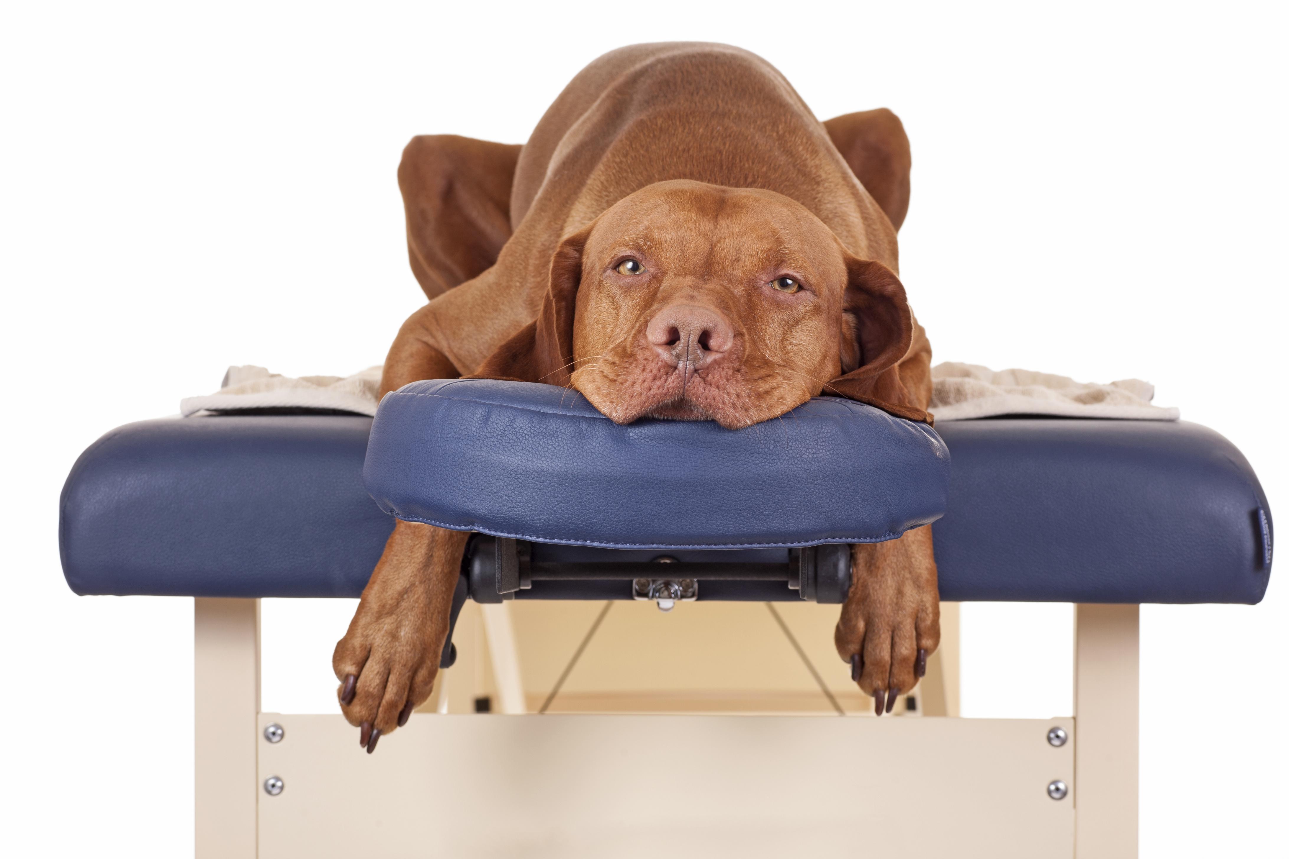 Hundeosteopathie: Die Osteopathie für den Hund. Bild: Quasarphoto/fotolia)