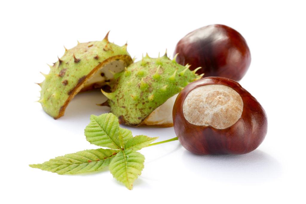 Extrakte aus der Rosskastanie bieten natürliche Hilfe bei Wasser in den Beinen. (Bild: eyetronic/fotolia.com)