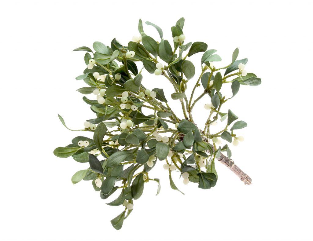 Mistelextrakte zählen zu den am häufigsten eingesetzten Alternativmedikamenten in der Krebstherapie. (Bild: euthymia/fotolia.com)