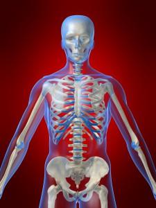 oberkrper eines menschlichen skeletts