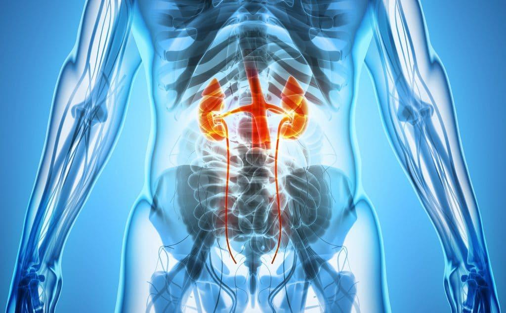 Nierenschmerzen - Ursachen und Therapie