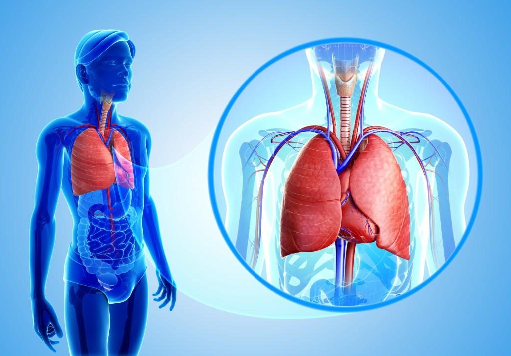 Thoraxschmerzen Ursachen Anzeichen Und Therapie