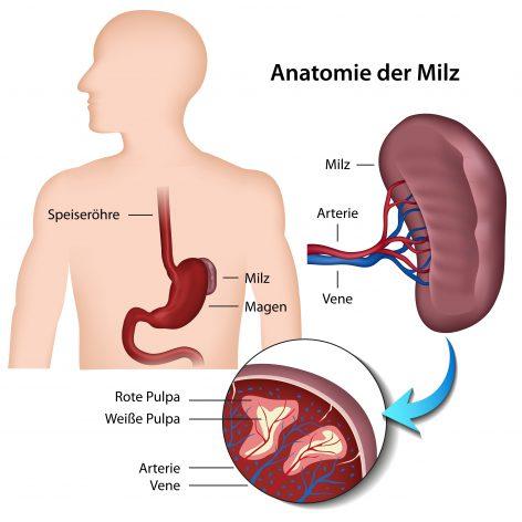 Milzschmerzen - Ursachen und Behandlung