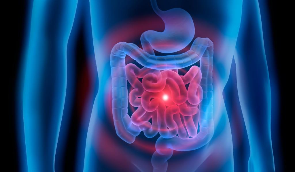 Eine Animation des Magen-Darm-Trakts