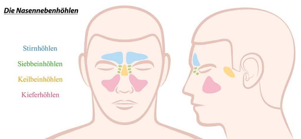 Stirnhöhlenentzündung - Symptome, Behandlung und Hausmittel