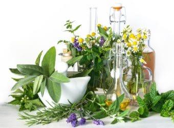 Zusammenstellung verschiedener Heilpflanzen.