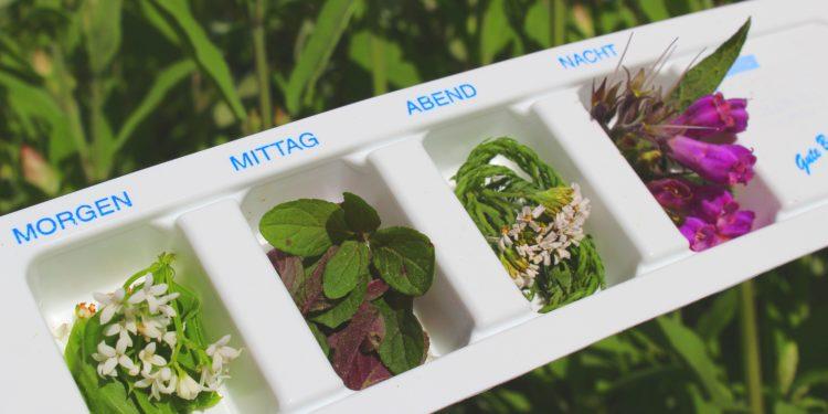 Verschiedene Heilpflanzen liegen in den Kammern einer Tablettenbox.