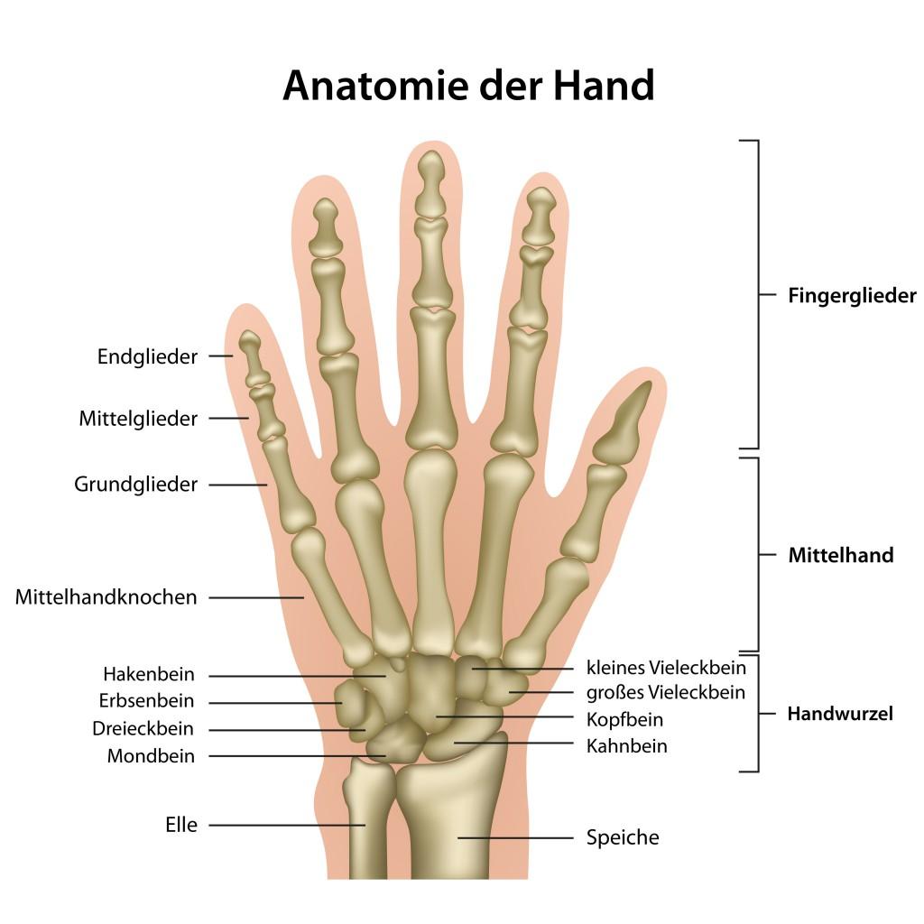 Schön Gelenke Der Hand Galerie - Anatomie Und Physiologie Knochen ...