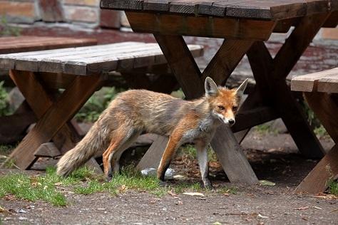 Die Übertragung von Fuchsbandwurmeiern ist zum Beispiel über Erde,  die mit dem Kot infizierter Füchse verunreinigt ist, möglich. (Bild: hecke71/fotolia.com)