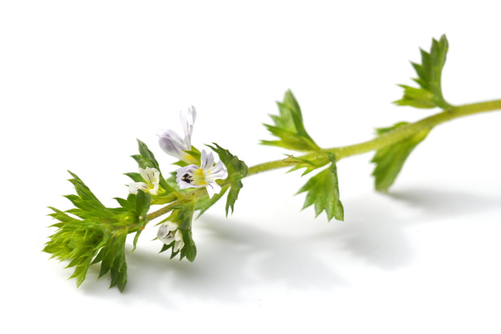 """Euphrasia, der so genannte """"Augentrost"""", ist in der traditionellen Pflanzenheilkunde ein bewährtes Mittel für Augenbeschwerden aller Art. (Bild: hhelene/fotolia.com)"""