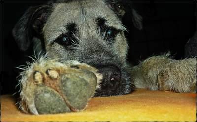 vegane-hundeeraehrung