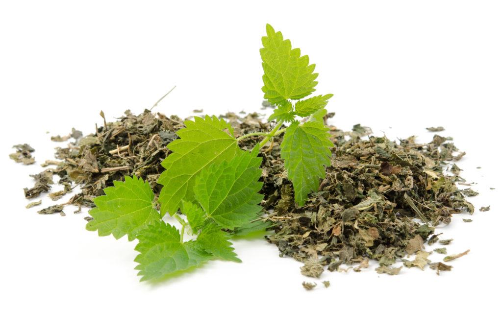 Brennnessel Blätter grün und getrocknet