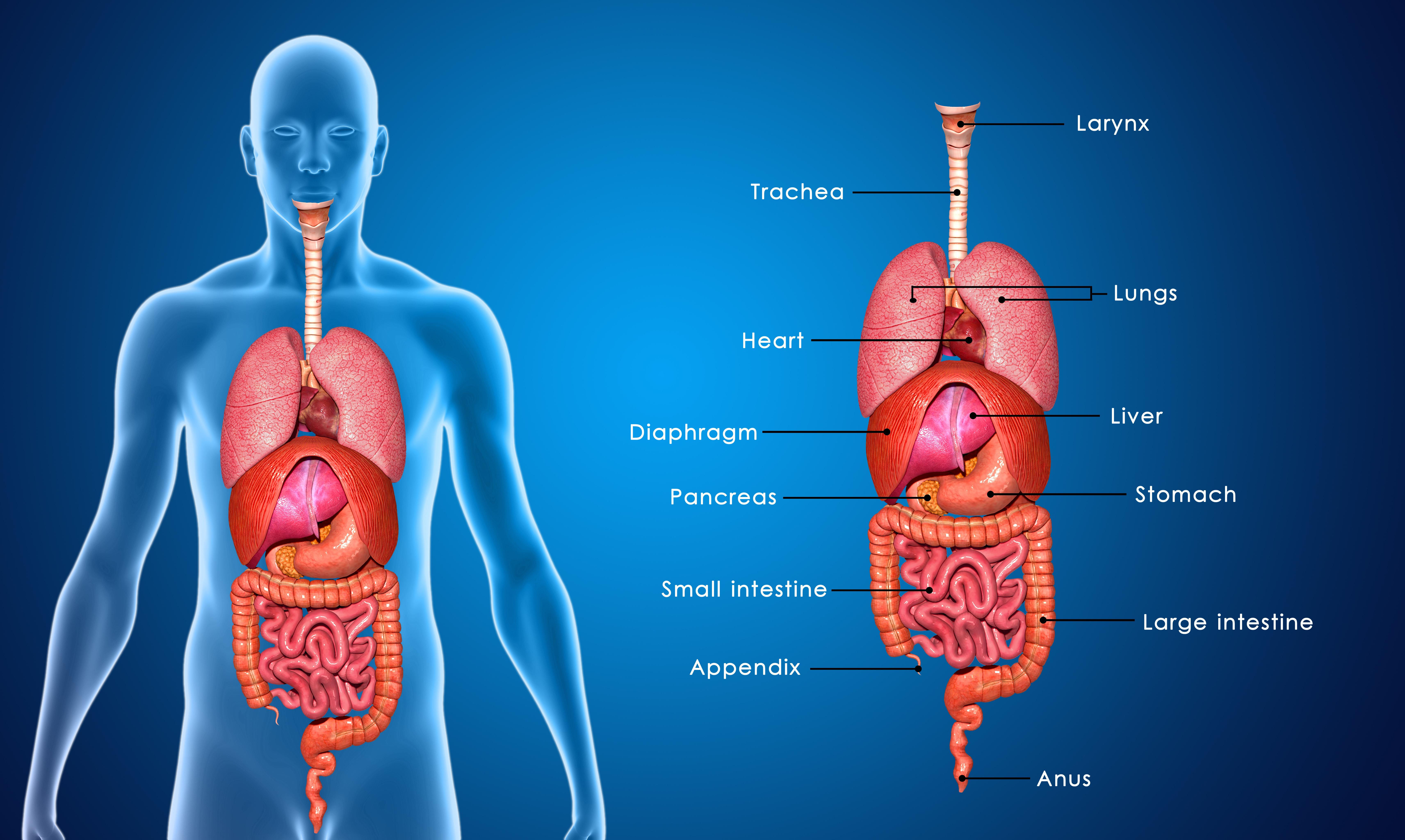 Brennen in der Brust - Ursachen und Behandlung