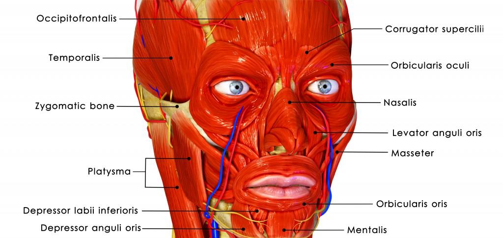 Schmerzen im Gesicht können muskuläre Verspannungen sein. (Bild: 7activestudio/fotolia)