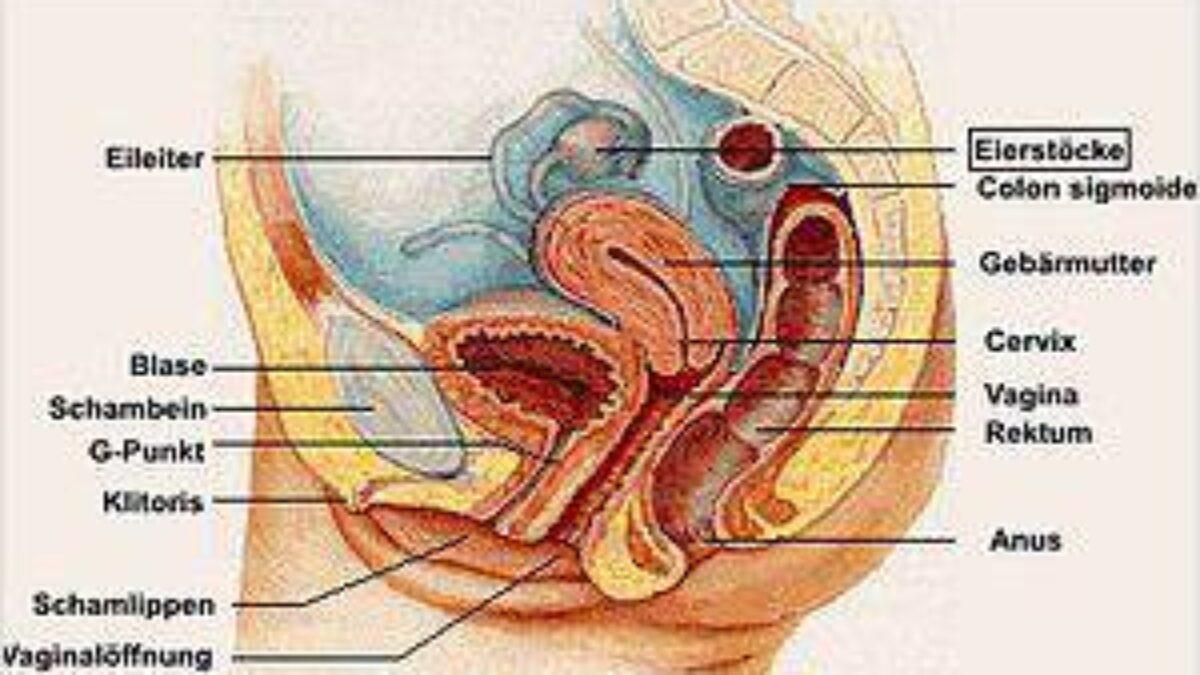 Gebärmutter eierstöcke entfernung und Bösartige Erkrankungen