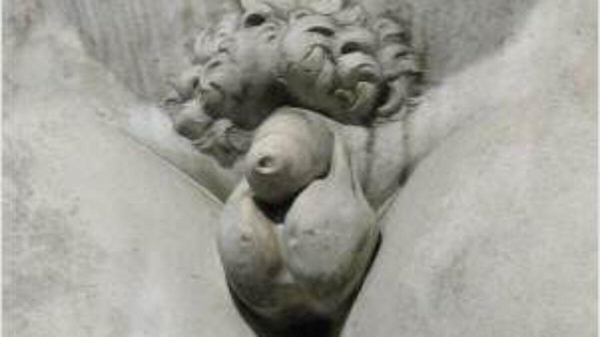 Des durchschnittliche männlichen glieds länge Penis Größe