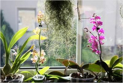 zimmerpflanzen_680