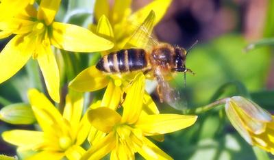 pestizide bienensterben studie