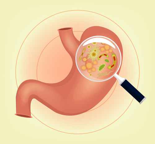 Oft sind Viren oder Keime verantwortlich für Beschwerden im Darm oder Magen.