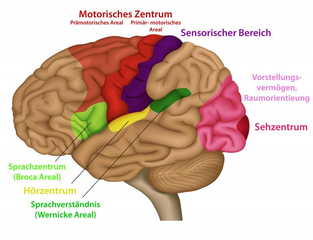 Funktionsweisen des Gehirns und Auslöser für Kopfschmerzen