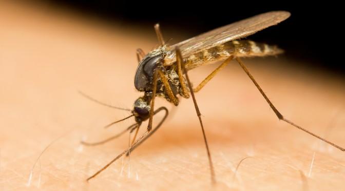 Mücke sticht in menschliche Haut