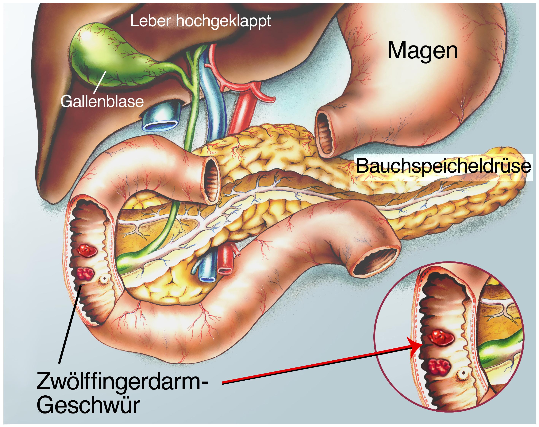 organ unter rechter rippe