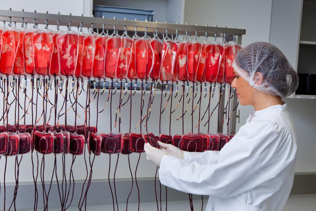 Eine Frau untersucht im Blutlabor die gespendeten Blutkonserven. Gesundheit und Vorsorge.