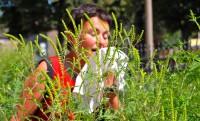 Mit Beginn der Ambrosia-Blüte zeigen viele Heuschnupfen-Patienten verstärkte Beschwerden. (Bild: stadelpeter/fotolia.com)