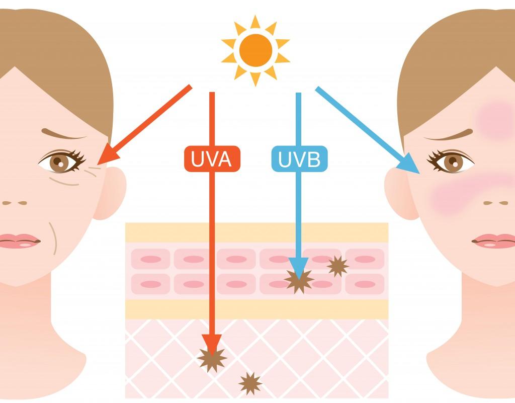 So schädigen UVB-UVA-Strahlen die Haut. (Bild: m0622-fotolia)