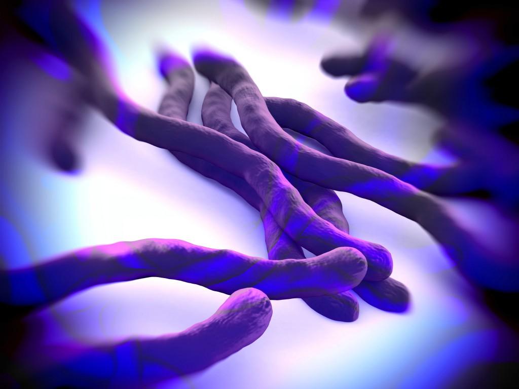 Amöben schädigen das Gehirn und lösen Entzündungen aus. (Bild: royaltystockphoto - fotolia)