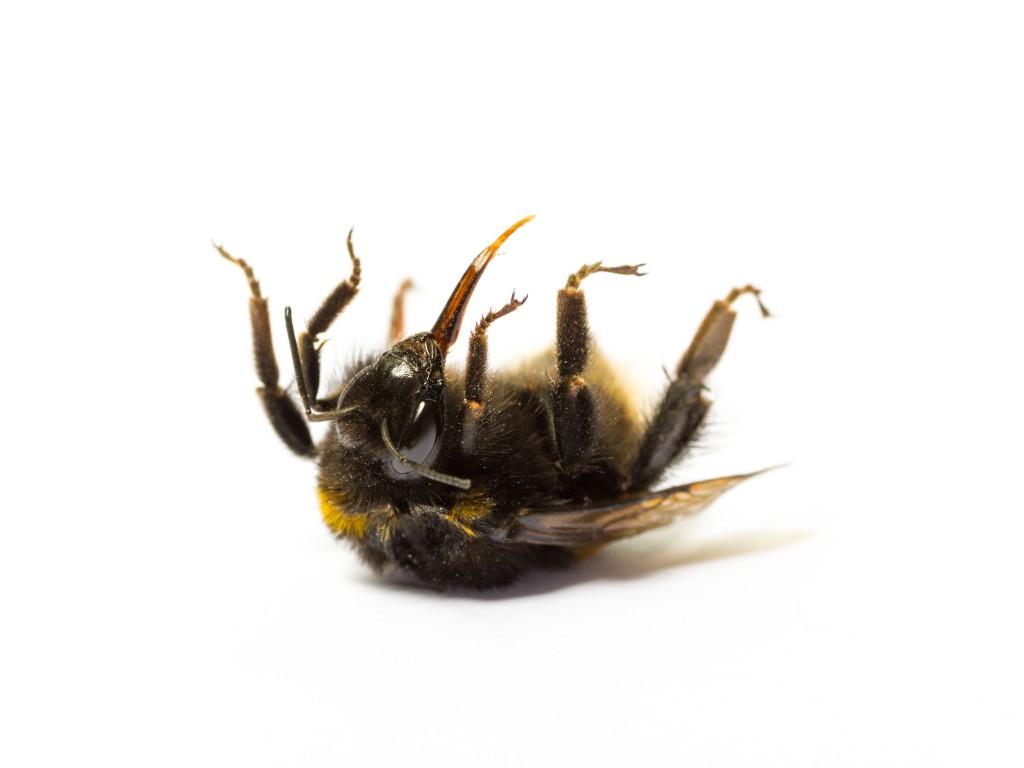 Millionen Tote durch Bienensterben. Bild: eyeQ - fotolia