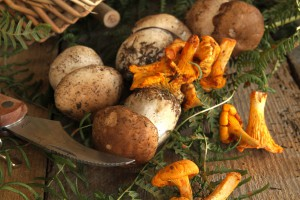 Unterschiedliche Pilz-Arten. Bild: Alain Wacquier - fotolia