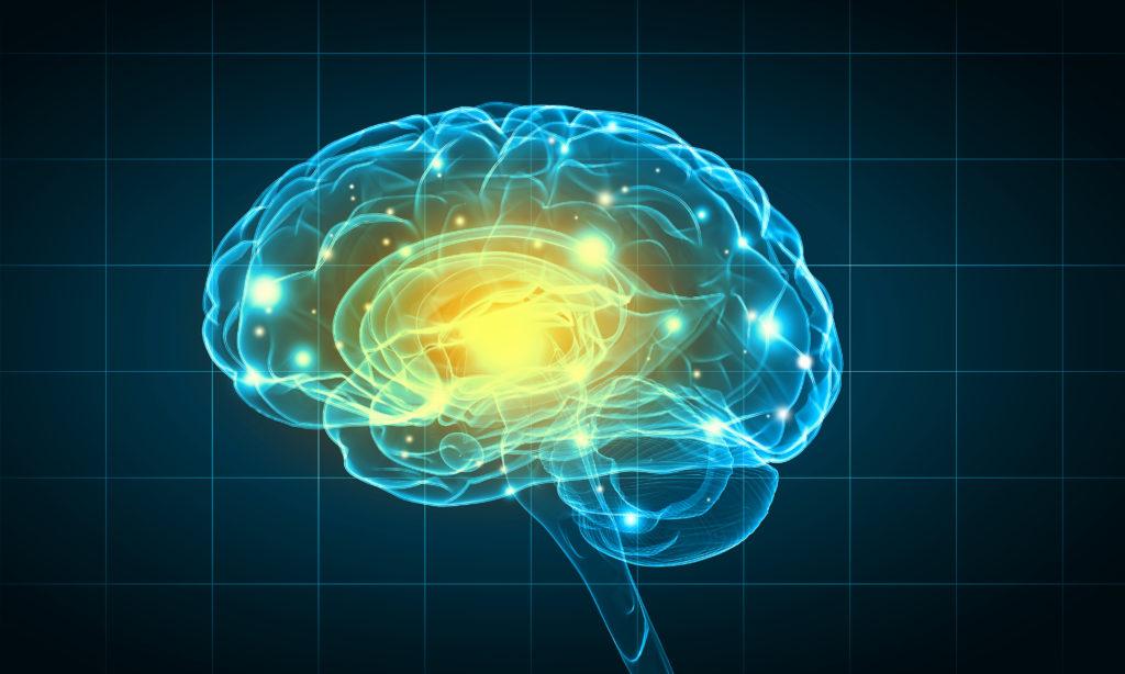 Gehirn aus dem Labor soll die Erforschung neuer Therapien erleichtern. (Bild: Sergey Nivens/fotolia.com)