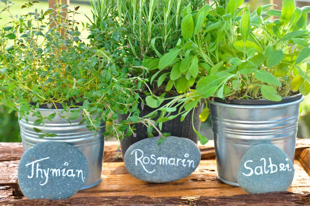 Frische Gewürze aus dem eigenen Garten können für den späteren Gebrauch eingefroren werden. (Bild: Marmel/fotolia.com)