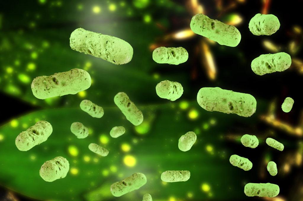 Salmonellen können sich bei Unterbrechung der Kühlkette in bestimmten Lebensmitteln leicht vermehren. (Bild: fotoliaxrender/fotolia.com)