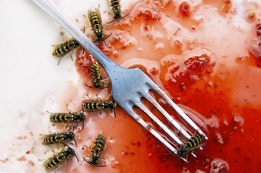 In den letzten Wochen ist eine regelrechte Wespen-Flut in Deutschland ausgebrochen. Bild: vectorass - fotolia