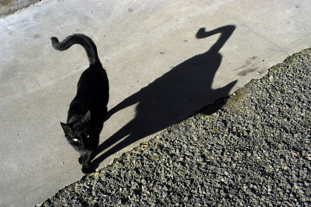 Schwarze Katzen werden bis heute von vielen Menschen in Zusammenhang mit bevorstehenden unheilvollen Ereignissen gebracht. (Bild: dicktraven/fotolia.com)