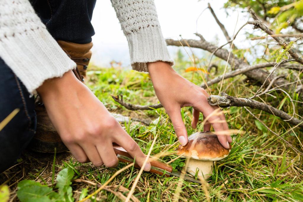Nur wer wirklich Ahnung hat, sollte Pilze im Wald suchen. Ansonsten drohen schwere Vergiftungen, die sogar zum Tode führen können. Bild: Kzenon - fotolia