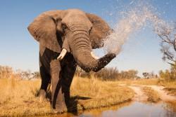 Elefanten-Krebs-1024x682