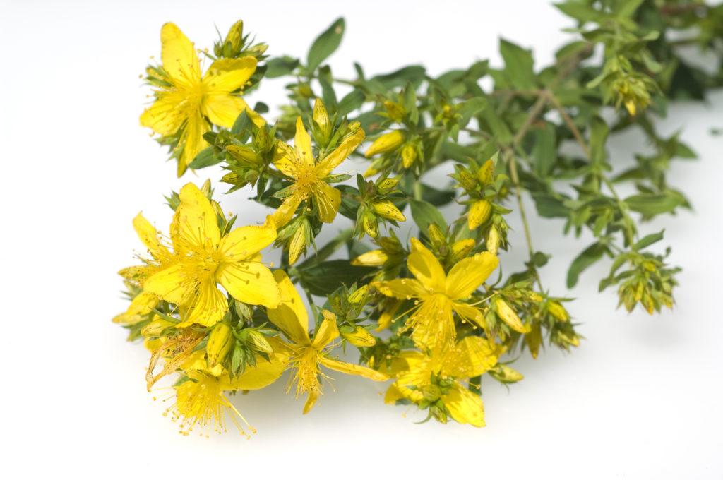 Johanniskraut wird in der Naturheilkunde häufig zur Behandlung von Nervenverletzungen eingesetzt. (Bild: emer/fotolia.com)