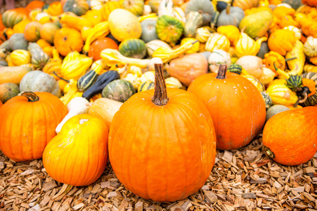 Kürbisse geschmacklich und gesundheitlich eine Bereicherung für den Speiseplan. (Bild: drubig-photo/fotolia.com)