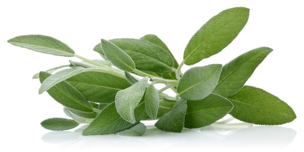 Salbei ist besonders bei Erkältungskrankheiten lindernd und schützend. Bild: mates - fotolia