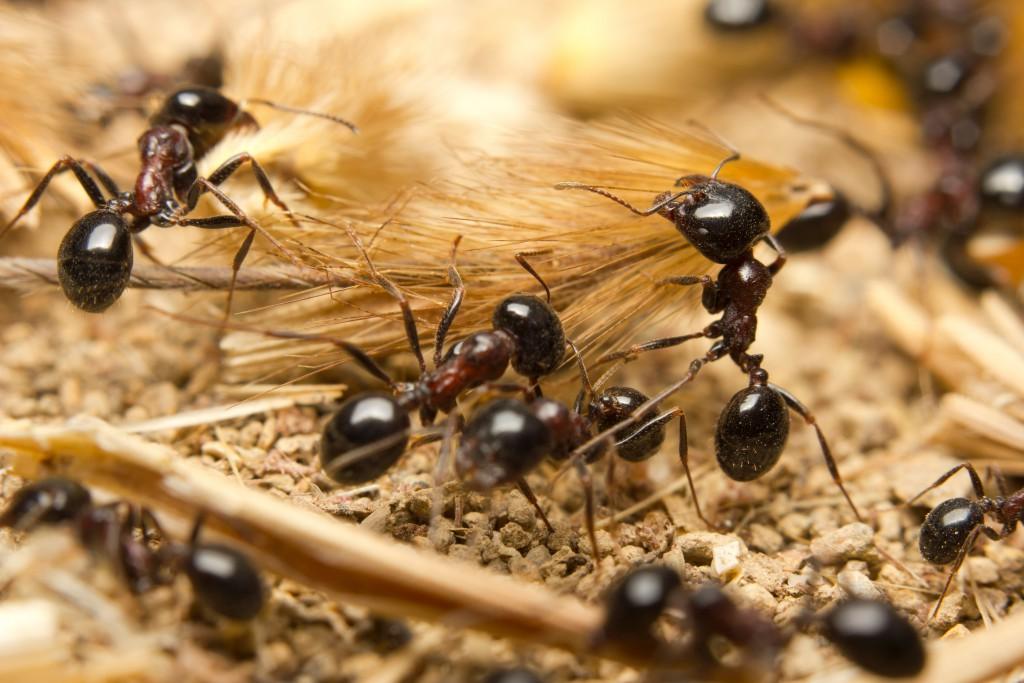 Ameisen haben spezielle Künste entwickelt, um sich zu schützen. Bild: claffra - fotolia