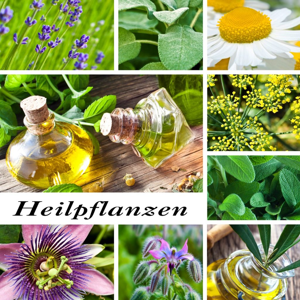 Heilpflanzen in der modernen Medizin. Bild: PhotoSG - fotolia