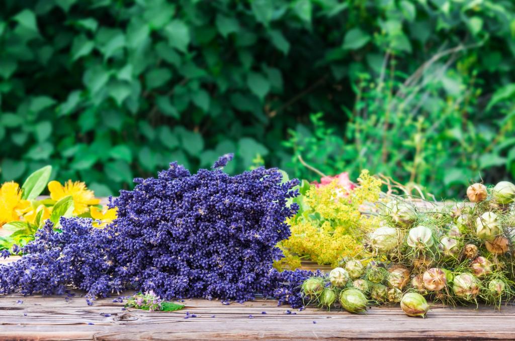 Lavendel und Johanniskraut: Beides wirksam bei depressiven Verstimmungen. Bild: fotoknips - fotolia
